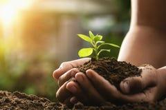 举行植物生长和日落的手 概念eco和绿色wor 图库摄影