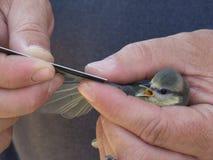 举行的小的鸟 库存图片