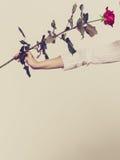 举行红色浪漫的妇女手上升了 免版税库存照片