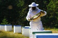 举行蜂箱检查的蜂农 库存照片
