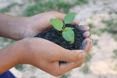 举行绿色小植物新的生活概念的人的手。 免版税库存图片