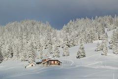 之家和杉树在冬天,朱拉山,瑞士 免版税图库摄影