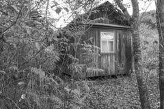 之家在森林 库存照片