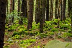 乌克兰森林在夏天 库存图片