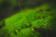 乌克兰森林 库存照片