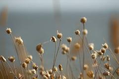 乌克兰的夏天海岸有野花的在尼古拉耶夫州附近 自然墙纸背景 免版税库存图片