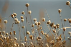 乌克兰的夏天海岸有野花的在尼古拉耶夫州附近 自然墙纸背景 免版税库存照片