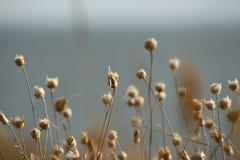 乌克兰的夏天海岸有野花的在尼古拉耶夫州附近 自然墙纸背景 图库摄影