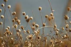 乌克兰的夏天海岸有野花的在尼古拉耶夫州附近 自然墙纸背景 库存照片