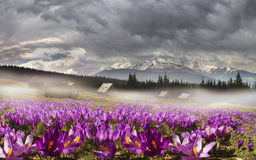 乌克兰的山脉 图库摄影