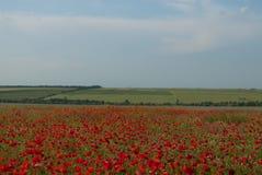 乌克兰的干草原和领域 免版税图库摄影