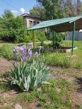 乌克兰的植物群 风景 植物灌木在与木盖子的一个沙盒附近叫Cockerel,增长在花床上, 在.eps文件,分别地编组每个元素 库存照片