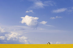 乌克兰领域 库存图片