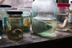 乌克兰 切尔诺贝利禁区 - 2016年 03 20 鱼的准备在被放弃的实验室 库存照片