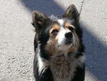 乌克兰 小的狗 希望 免版税库存照片
