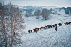乌兰Buh草原在冬天 免版税库存照片