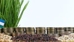 乌兹别克斯坦沙文主义情绪与堆金钱硬币和堆麦子 股票视频