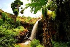乌干达 库存图片