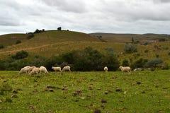 乌拉圭自然场面 免版税库存图片