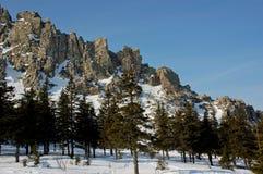 乌拉尔山脉的森林 免版税库存照片