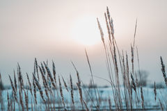 乌拉尔风景 图库摄影