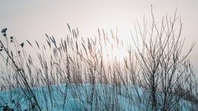 乌拉尔风景 库存照片
