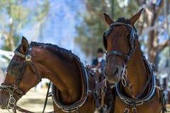 乌特雷纳4月市场塞维利亚装饰和马的 库存图片