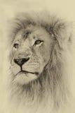 乌贼属定了调子狮子表面 图库摄影