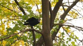 乌鸦从树离开 影视素材