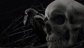 乌鸦和头骨构成 库存照片