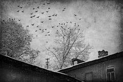 乌鸦在一个被放弃的城市 免版税库存照片