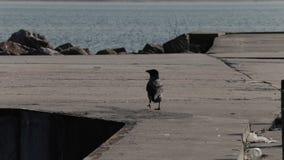 乌鸦在海码头走 股票录像