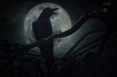乌鸦坐死的树干并且呱呱地叫在篱芭,老难看的东西cas 免版税库存照片