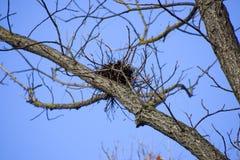 乌鸦巢在树高分支的  后秋天 鸟巢  库存图片