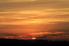 乌鸦,在日落 免版税库存图片
