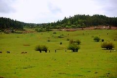 乌龙神仙的山草原 库存照片