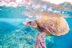 乌龟呼吸 免版税图库摄影