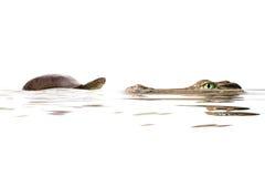 乌龟和鳄鱼 免版税库存照片