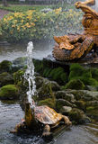 乌龟喷泉在Peterhof庭院里 库存图片