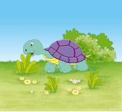 乌龟在密林 免版税图库摄影