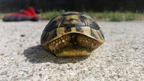 乌龟在市区 免版税库存照片