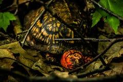 乌龟在森林 库存照片