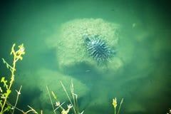 乌龟在海 免版税库存照片