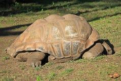乌龟在巴塞罗那动物园里 免版税库存照片