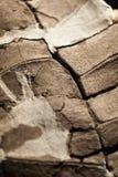 乌龟壳化石 库存照片