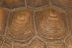 乌龟壳纹理 库存照片