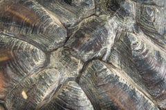 乌龟壳 库存图片