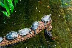 乌龟家庭 免版税库存图片