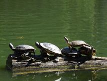 乌龟家庭 免版税库存照片