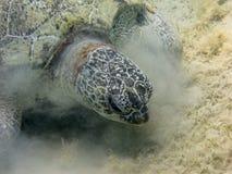 乌龟导致的沙尘暴 图库摄影
